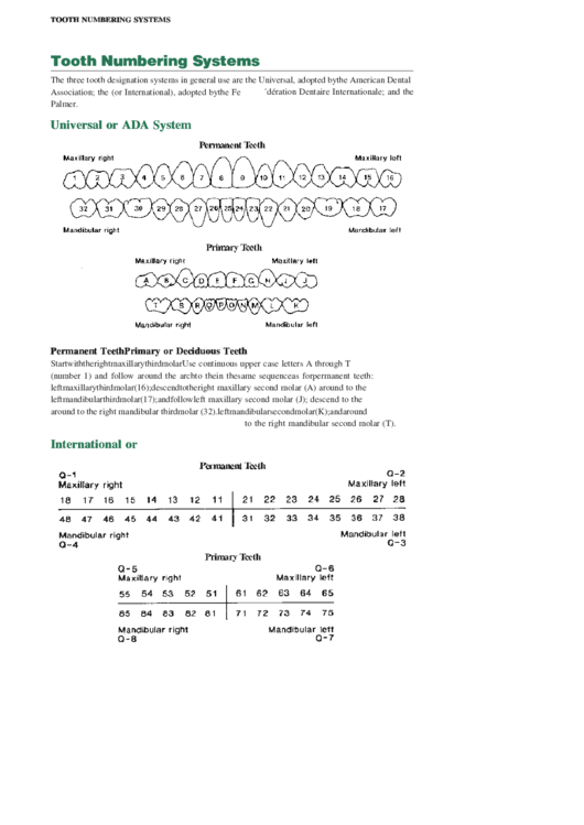 Tooth Numbering Systems printable pdf download
