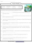 Food Chains Biology Worksheet