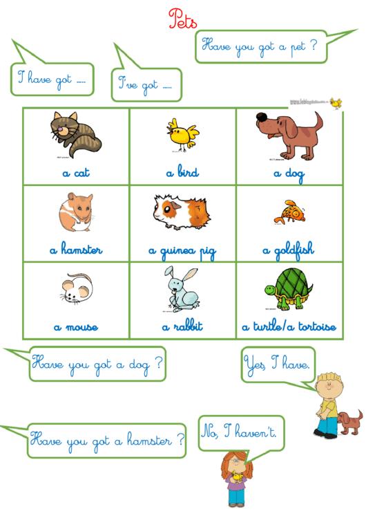 Pets - Biology Worksheets