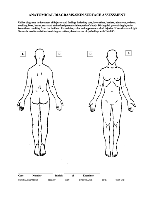 Anatomical Diagrams-skin Surface Assessment