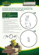 Shrek - Thaumatrope Spinner (optical Toy) Template