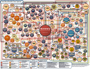 Obamacare Chart - Your New Health Care System