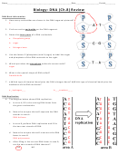 Biology (dna) Worksheet - Answer Key