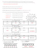 Biology (Dna) Worksheet - Answer Key printable pdf download