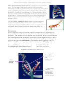 Protein Synthesis - Transcription And Translation Biology Worksheet