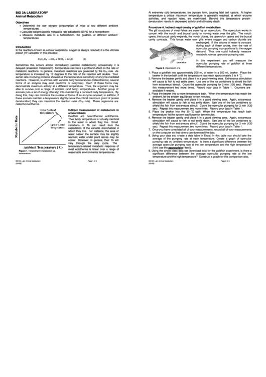 Animal Metabolism Biology Lab Report Template