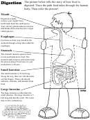 Digestion Worksheet