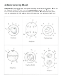 Mitosis Coloring Sheet And Questions