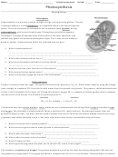 Photosynthesis Making Energy Worksheet