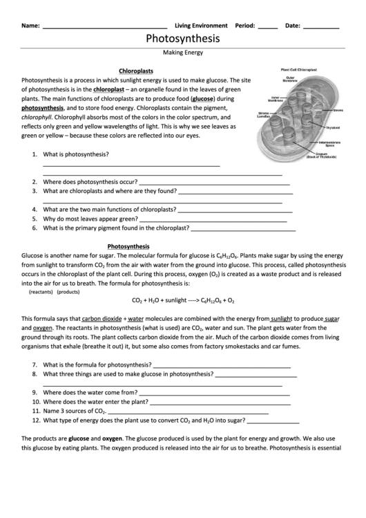 Photosynthesis Making Energy Worksheet printable pdf download