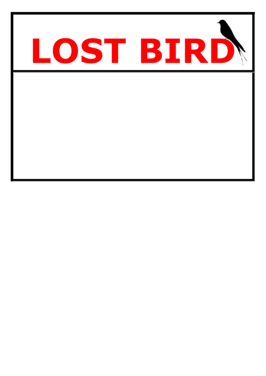 Lost Bird Poster Template