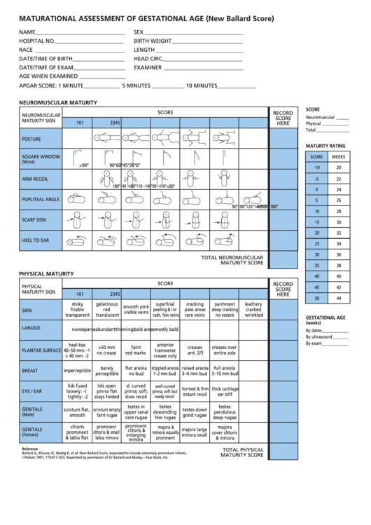 Maturational Assessment Of Gestational Age New Ballard Score Chart Printable Pdf