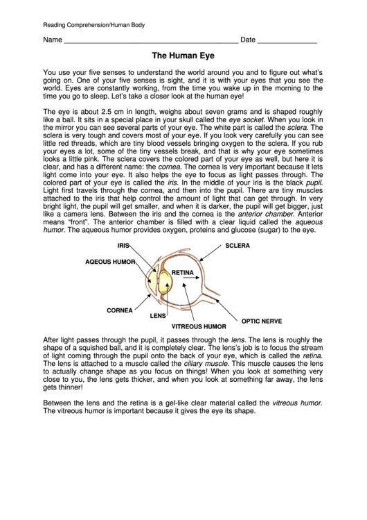 Reading Comprehension/human Body printable pdf download