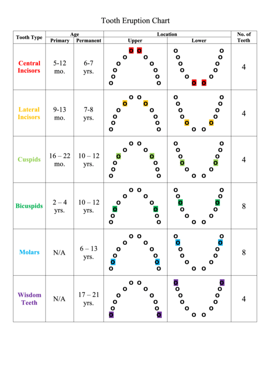 Tooth Eruption Chart By Age Printable pdf