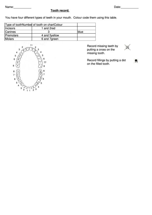 Tooth Record Table Template
