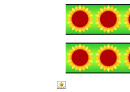 Sunflower Border Template For Displays