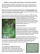Harmful Algal Blooms Can Be Deadly To Pets And Livestock - Veterinary Diagnostic Center