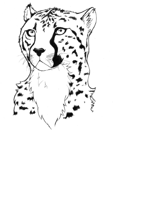 Cheetah Coloring Sheet Printable Pdf Download