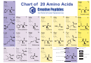 20 Amino Acids Chart