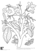 Science Coloring Sheets