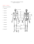 Anatomy & Physiology Worksheet With Answers