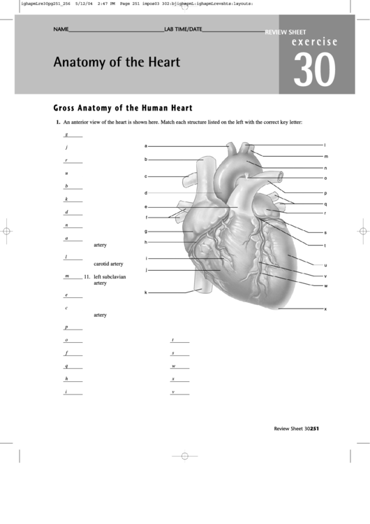 Anatomy Of The Heart Worksheet With Answers printable pdf ...
