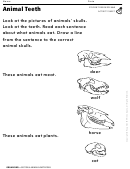 Animal Teeth Activity Sheet