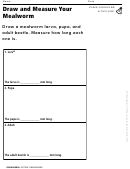 Draw And Measure Your Mealworm Organisms Activity Sheet