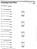Counting Fruit Flies Life Cycles Activity Sheet