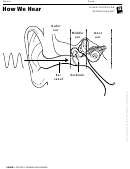 How We Hear - Ear Information Sheet