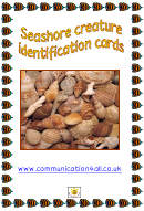 Seashore Creature Identification Cards Templates