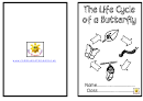 Life Cycle Of Butterfly Activity Sheets