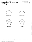 Comparing Pill Bugs And Sow Bugs Activity Sheet