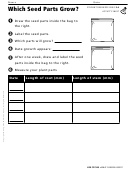 Which Seed Parts Grow Activity Sheet
