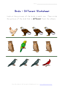 Birds - Different Worksheet