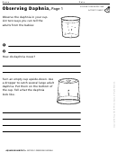 Observing Daphnia Biology Worksheet