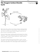 The Oxygen-carbon Dioxide Cycle Biology Worksheet