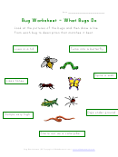 What Bugs Do Worksheet