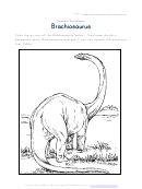 Brachiosaurus - Dinosaur Worksheet