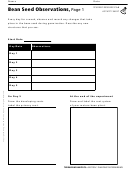Bean Seed Observations Biology Worksheet