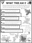 What Tree Am I Kids Activity Sheets With Answers