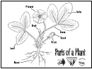 Parts Of A Plant Biology Reference Sheet
