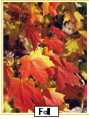 Red Fall Leaf Poster Template