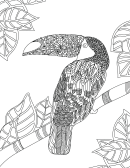 Toucan Hard Coloring Sheet