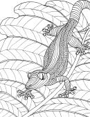 Lizard Hard Coloring Sheet