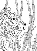 Tiger Hard Coloring Sheet