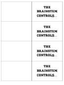 The Brainstem Controls Biology Flashcards Template
