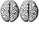 Brain Hemispheres Biology Flashcards Template
