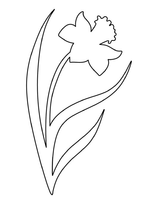 Daffodil Pattern Template