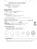 Reproduction And Development Worksheets